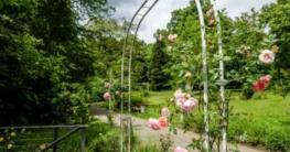 wann-waechst-rosenbogen-zu